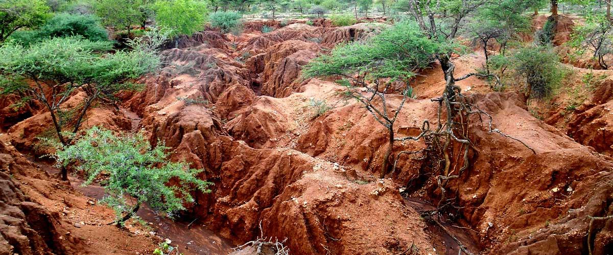 Drylands landscape
