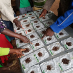 Farmers in a participatory soil-analysis workshop