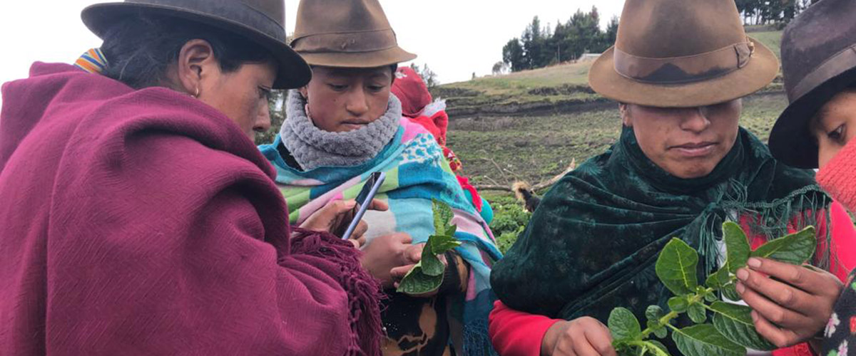 FRN members monitoring potato pests in Cotopaxi, Ecuador