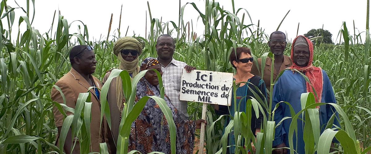 Pearl millet seed production by the Mooriben farmer union in Falwel-Niger